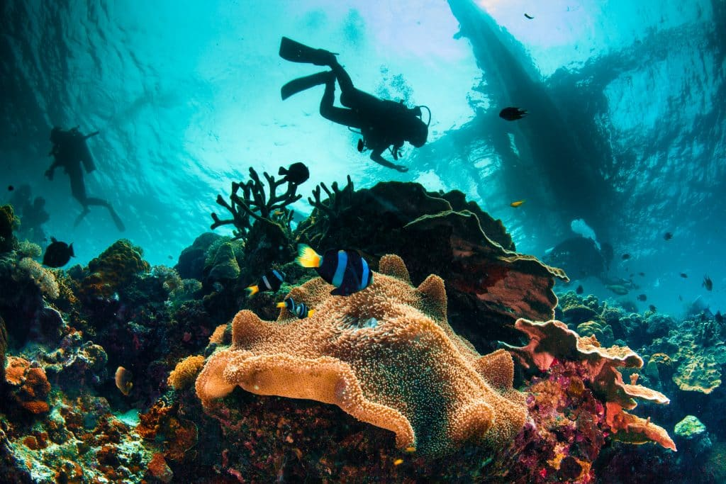 セブ島観光はダイビングの宝庫