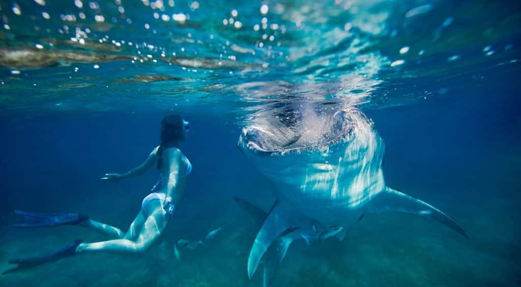 ジンベイザメと女性