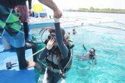 体験ダイビング、アイランドホッピング